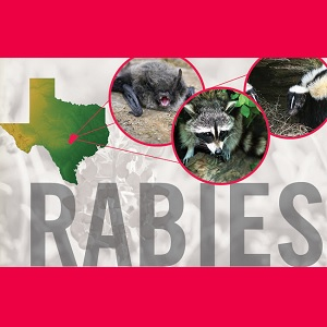 Rabies Safety Tips from ABC